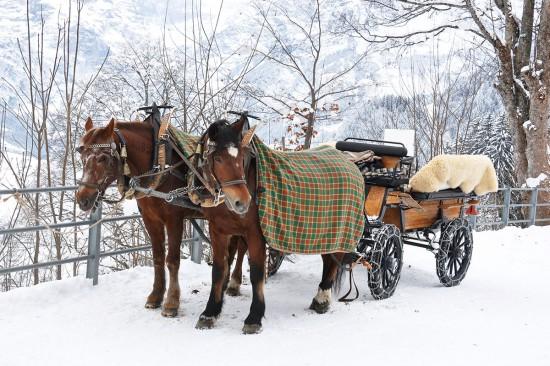 Winterurlaub - Mauterndorf - Pferdeschlittenfahrten
